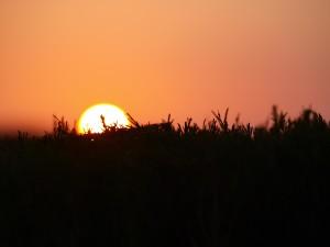 Sunrise over field photo